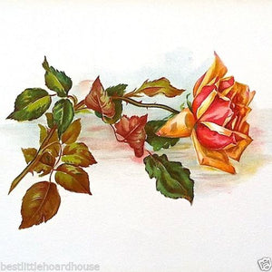 ORANGE ROSE Stone Lithograph Print 1909