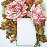 PINK ROSE Presentation Panel Lithograph Print 1910