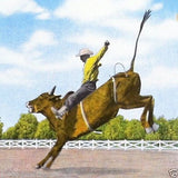RODEO BRONCO COWBOY Postcard 1940s