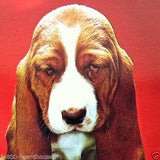 TIRED TRAVELER Basset Hound Dog Postcard 1970s