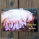 DINNER TIME ON FARM Pig Postcards 1970s