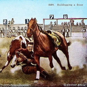 BULL DOGGING STEER Postcard 1920s
