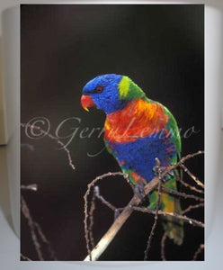 Rainbow Lorikeet Parrot 11 oz Coffee Mug