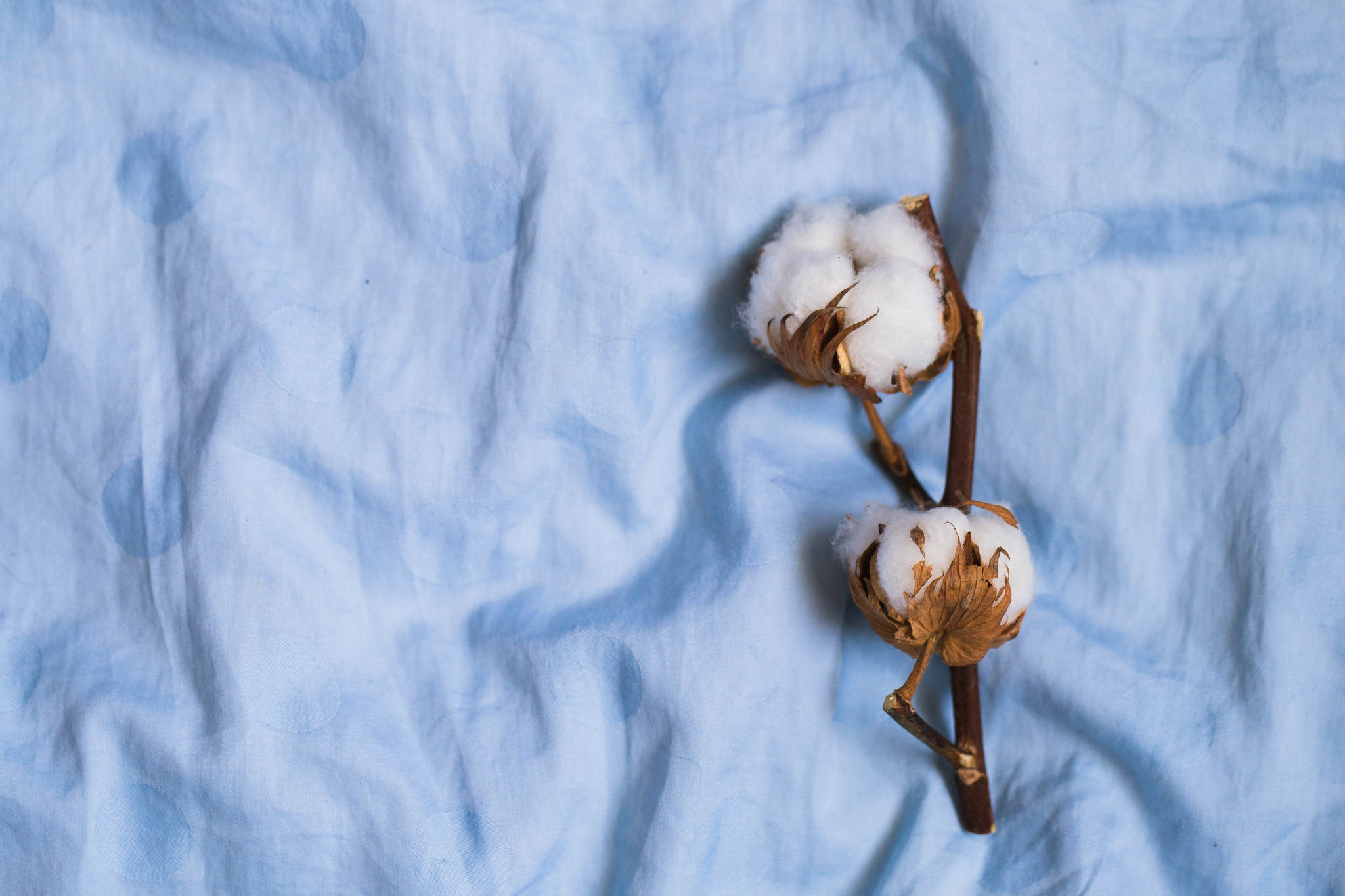 cotton flower on blue cloth, what is terry cloth