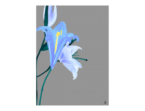 ARTISAN A3 WALL PRINT Wild Flower - Lisa & Alex