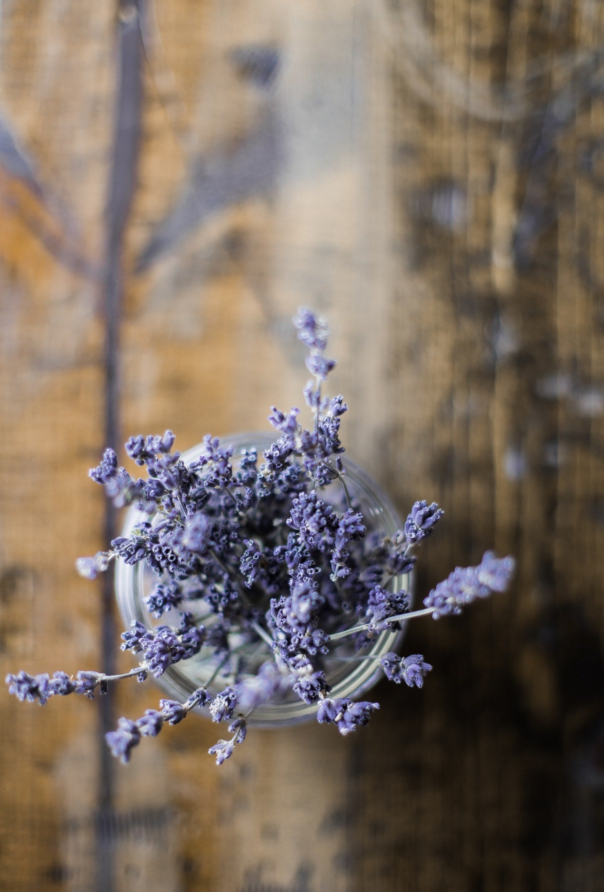 Lavender: 4 Benefits for Your Skin
