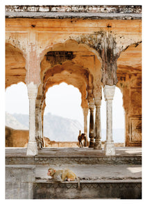 Monkeys in Temple Ruin, Jaipur (42x59cm)