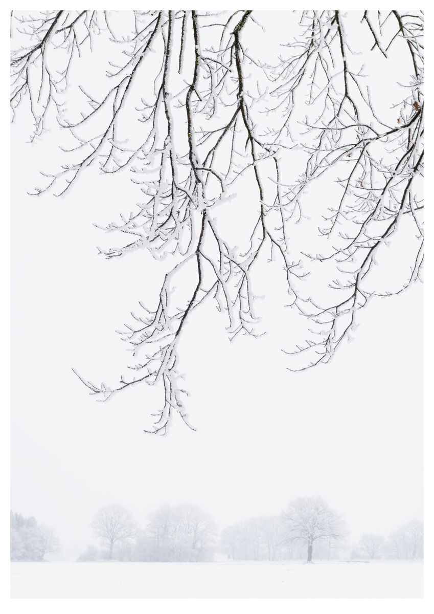 Frosty Branches (84x119cm)