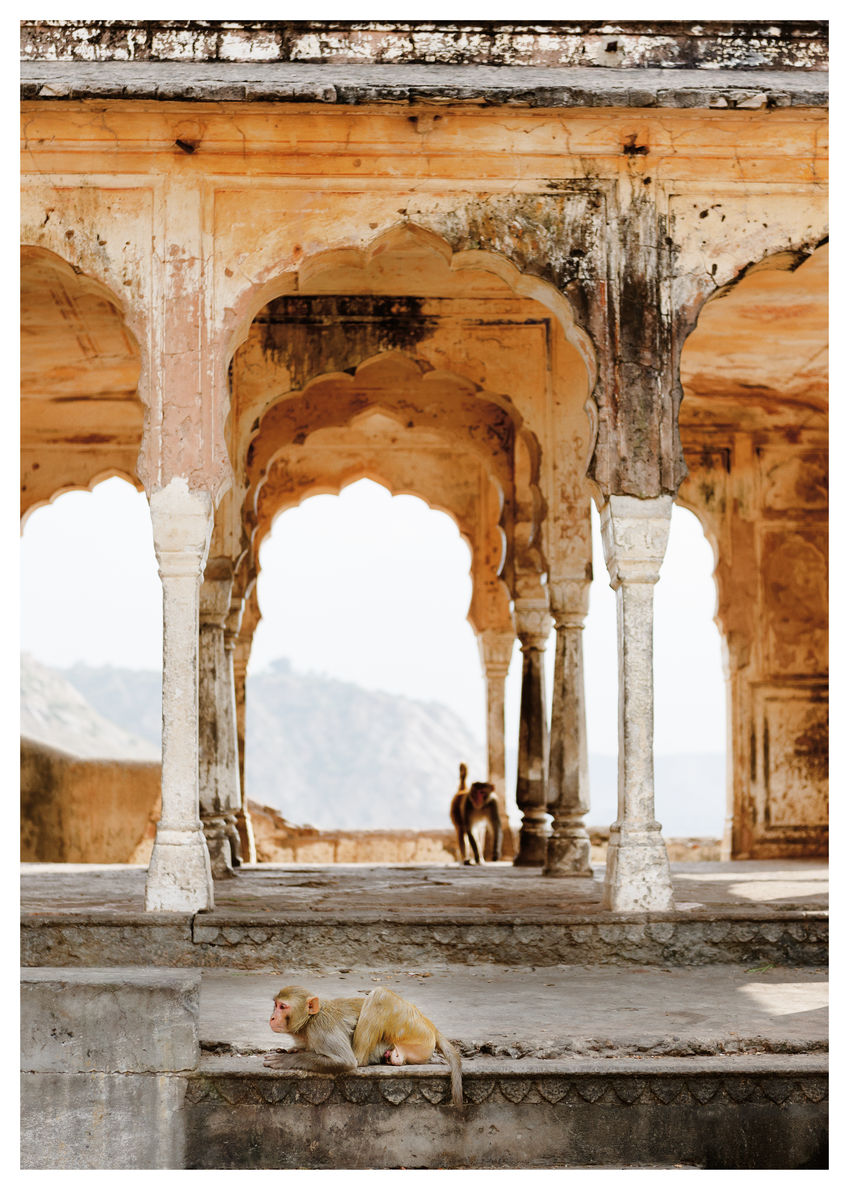 Monkeys in Temple Ruin, Jaipur (84x119cm)