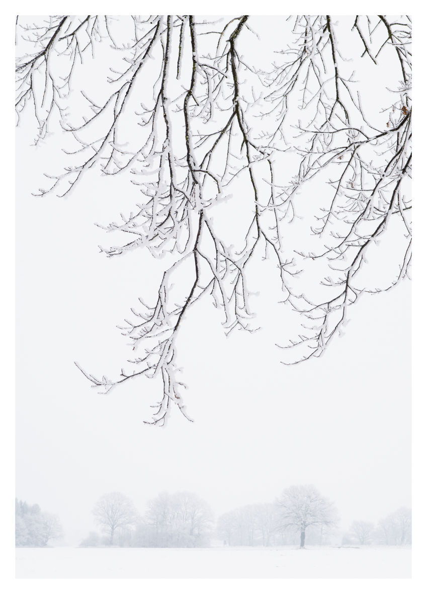 Frosty Branches (42x59cm)