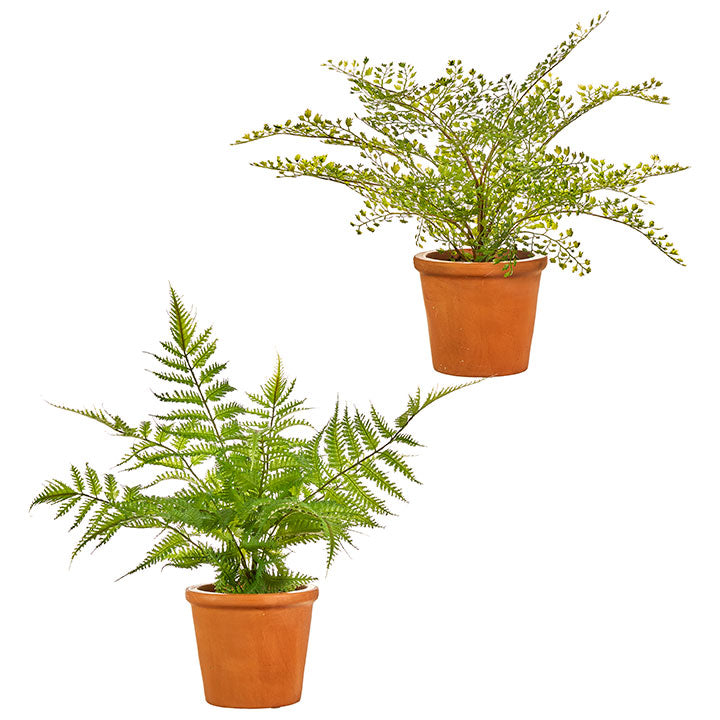 Potted Fern - Allure Boutique WY