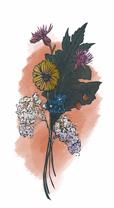 Wild Flowers drawn while listening to Lucy Davis