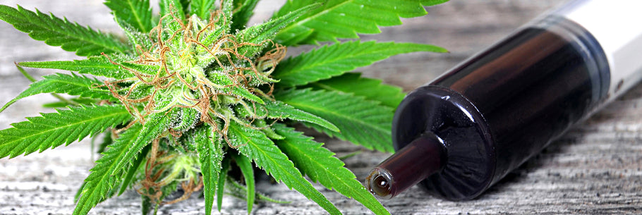 Neuroscientist Says Cannabis Oil can Protect DNA & Slow the Aging Process