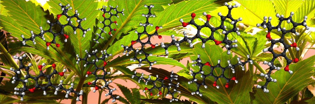 Liquid Life Research: Cannabis and Digestive Diseases
