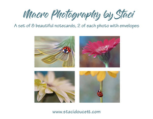 Macro Photo Note cards set of 8 with envelopes