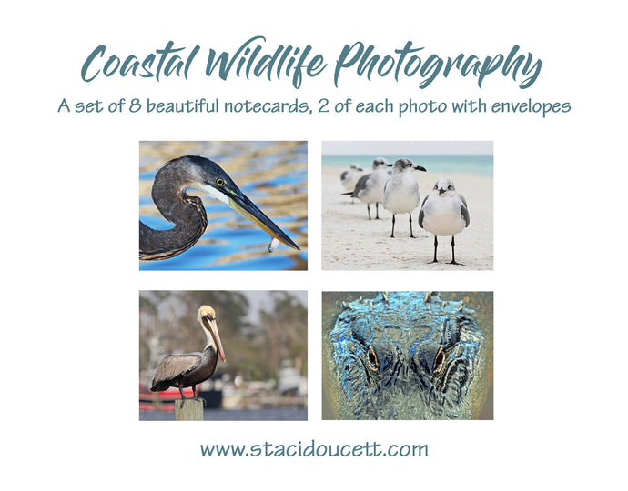 Original Coastal Photography Note Cards