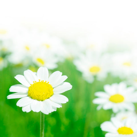 neuroplasticity developmental milestones