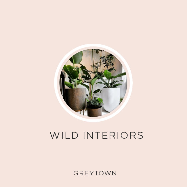 Natural Deodorant NZ made buy from Wild Interiors Greytown Wairarapa NZ | Award winning EverKind organic deodorant | Best in class for Men and Women