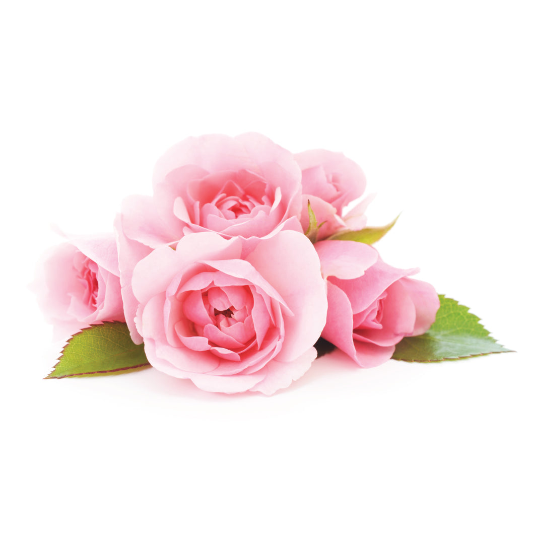 english rose fragrance oil