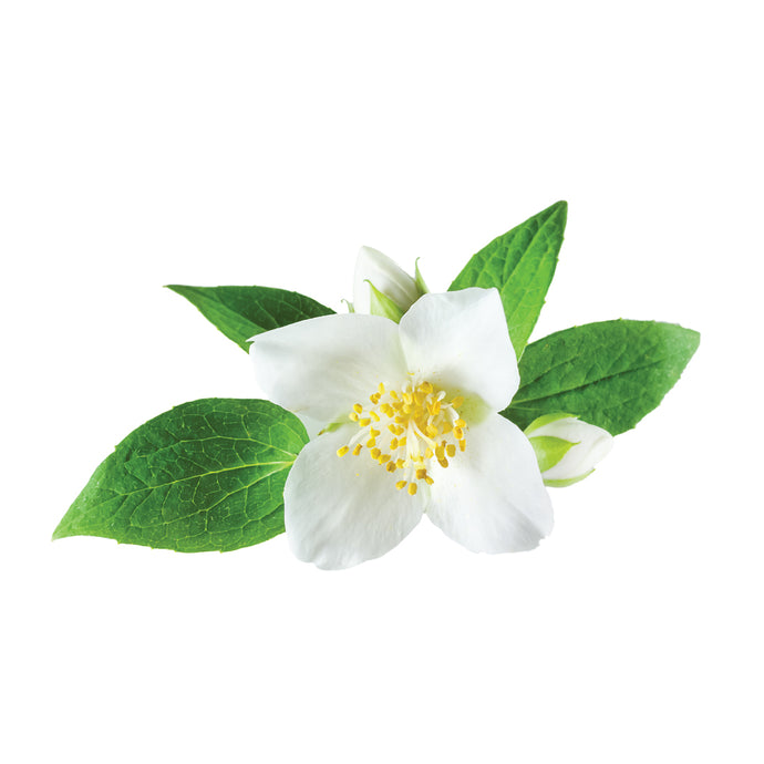 MIDNIGHT JASMINE FRAGRANCE OIL