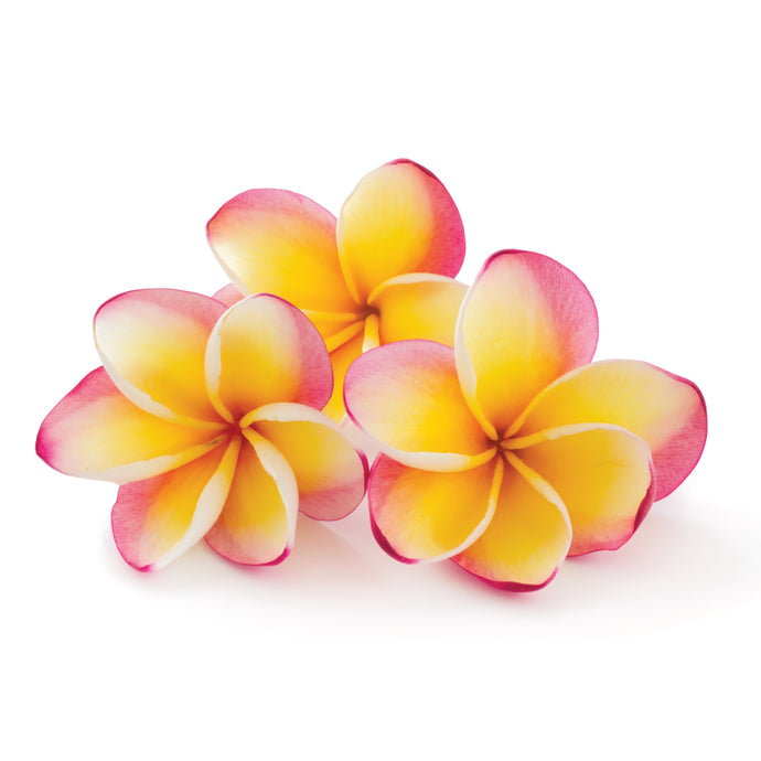 Hawaiian Plumeria Fragrance Oil