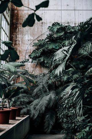 grønt, plants, wall, big, interior, clean air, living with plants, flowers, blomster, planter, green living,
