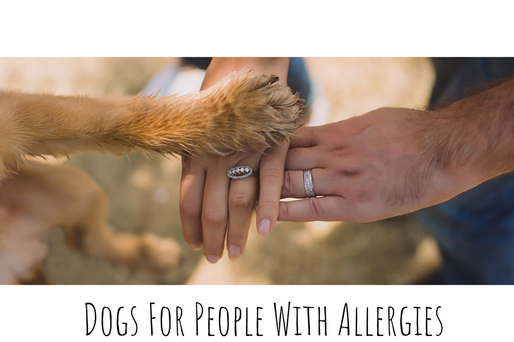 Common Dog Breeds For People With Allergies