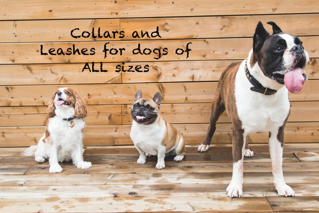 dog collars and leashes for small dogs and large dogs
