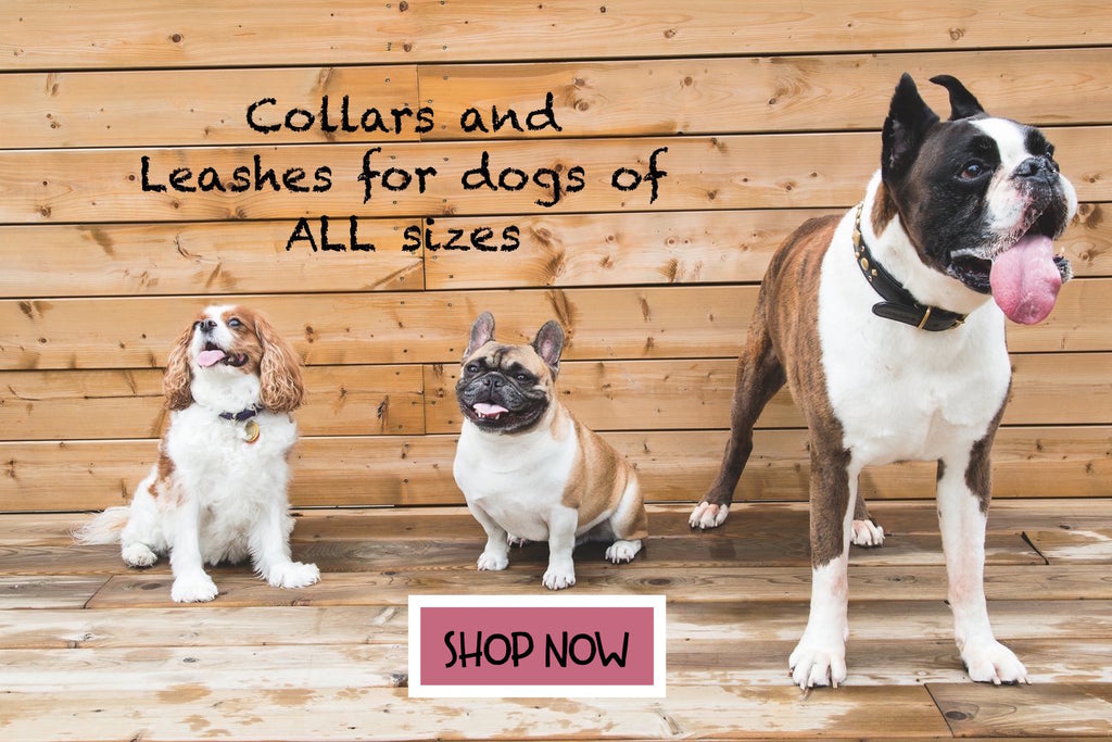 Collars for dogs of all sizes. From Teacup to giant breed dogs.