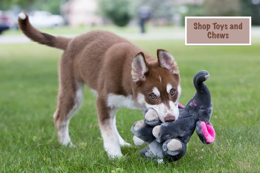 BigDogBoutique has toys for all dogs. From Plush to nearly indestructible toys for dogs.