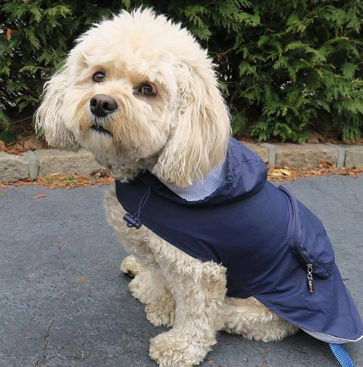 FabDog Raincoat for Dogs