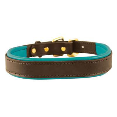 Padded Leather Dog Collar-  havana brown with turquoise