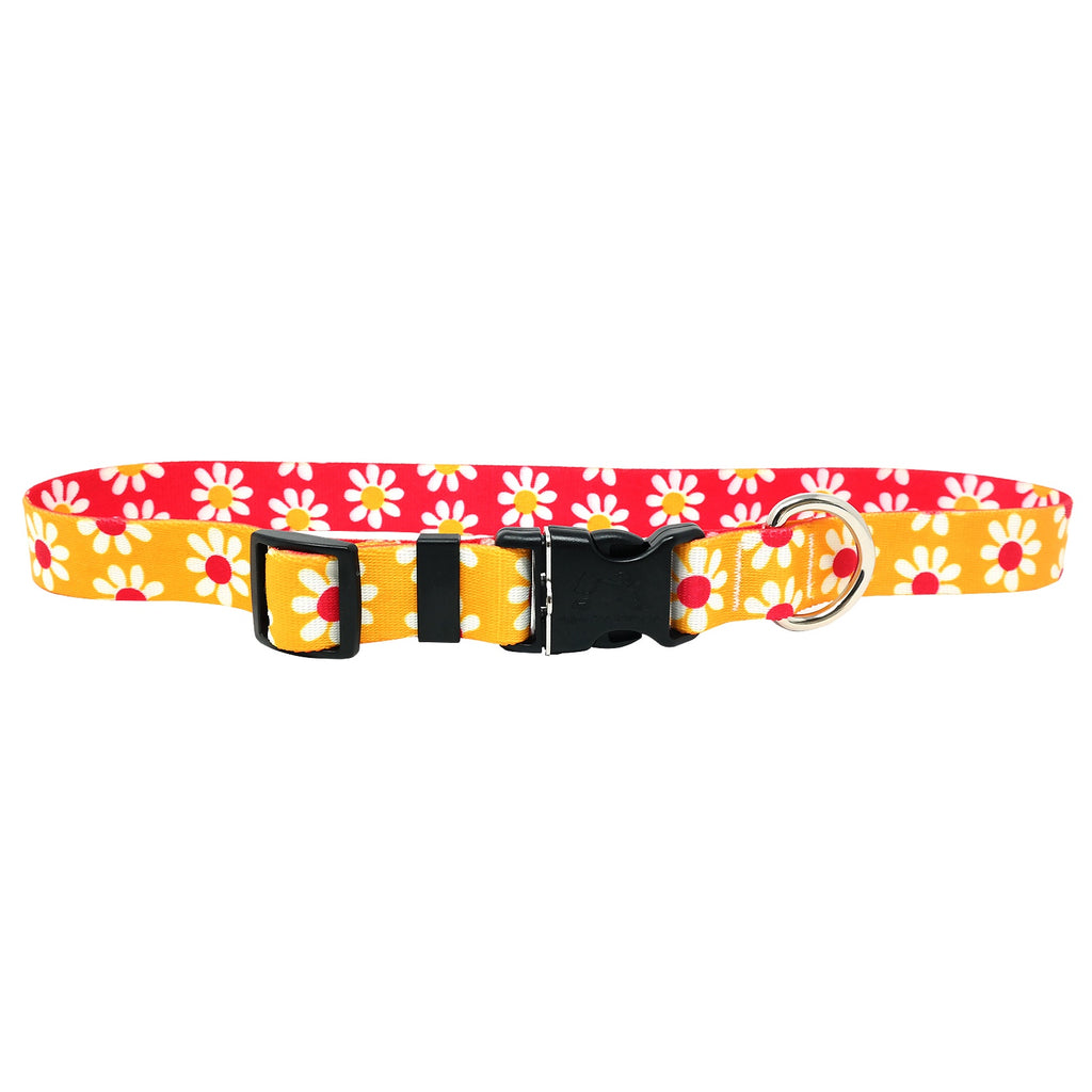 Gold & Magenta Daisy Dog Collar