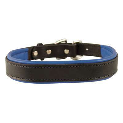 Padded Leather Dog Collar- black with royal blue padding