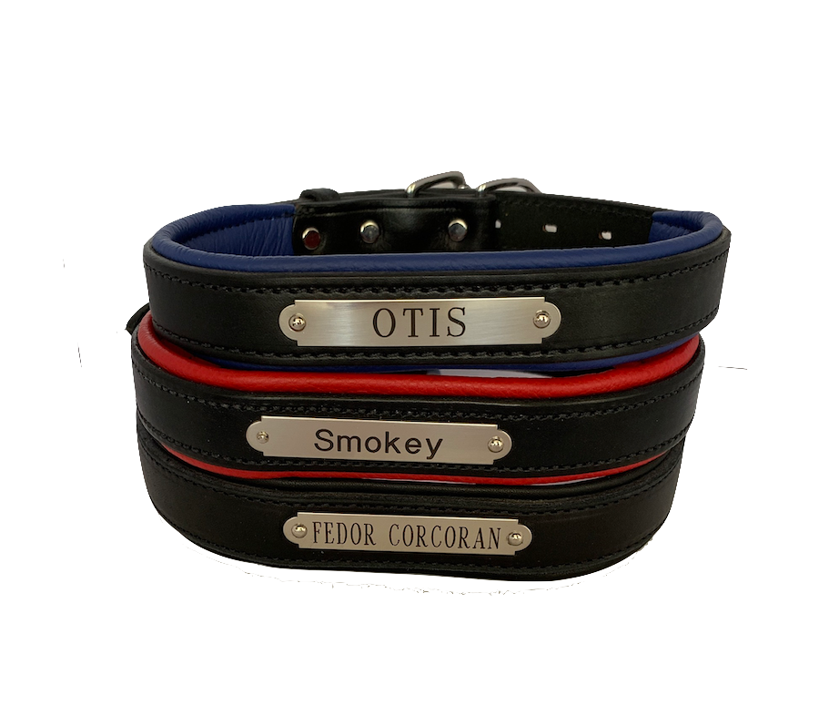 Engraved Padded Leather Dog Collar- black with colorful padding- USA made
