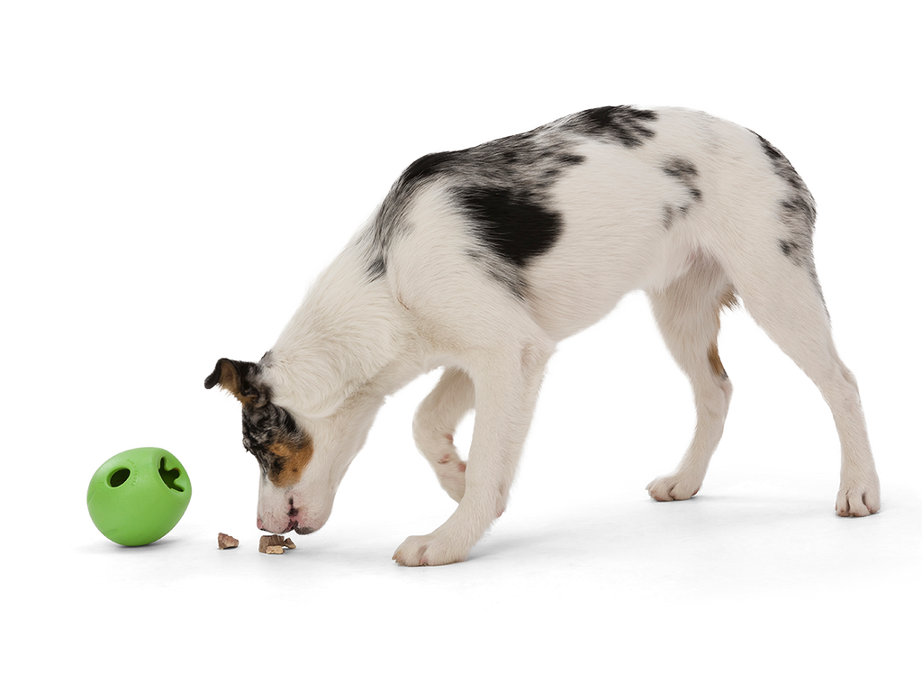West Paw Rumbl (Puzzle) Durable Dog Toy