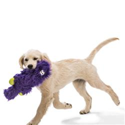 Rowdies Sanders with Zogoflex Dog Chew Toy by West Paw