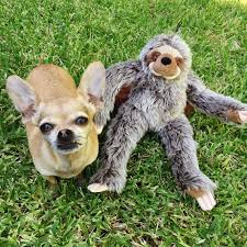 Tico Sloth Plush Dog Toy