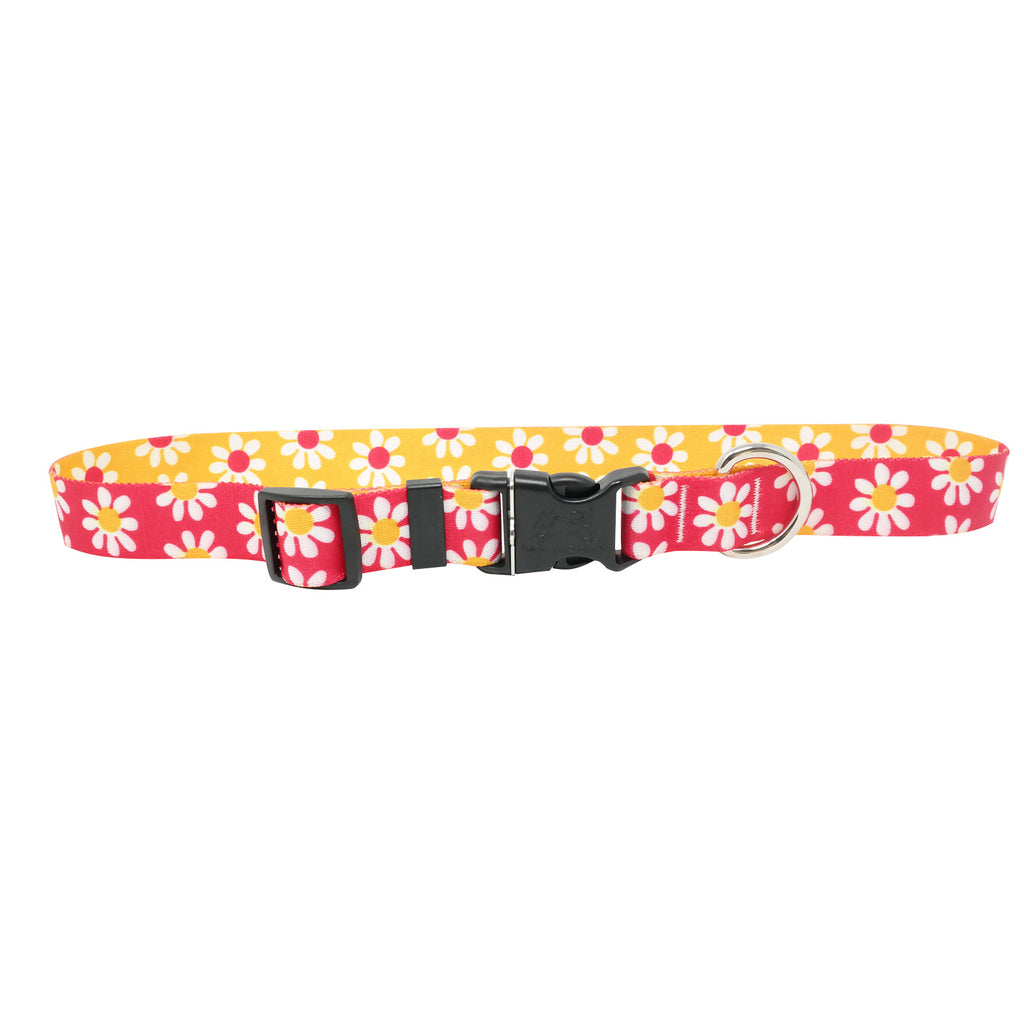 Daisy Magenta & Goldenrod Dog Collar