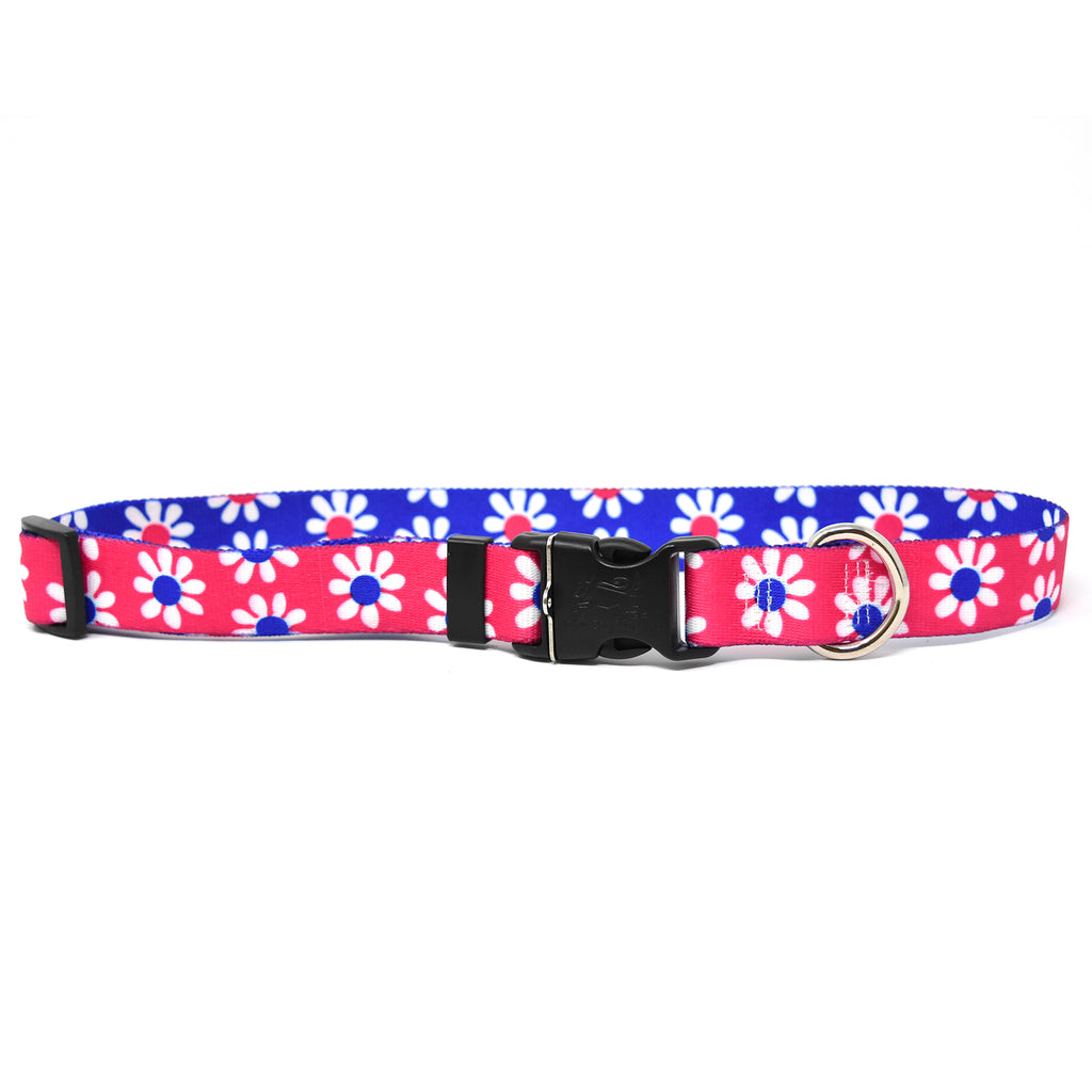 Daisy Magenta & Royal Collar