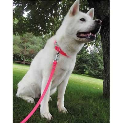 Sparky's Waterproof Dog Leash
