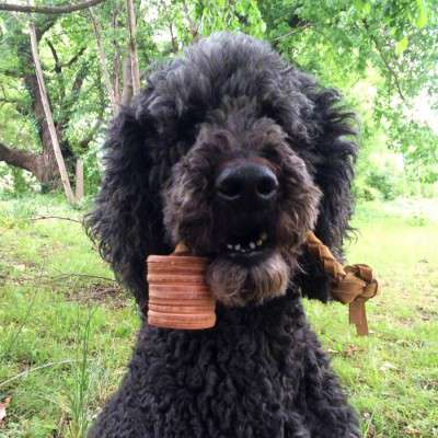 Leather Tug Dog Toys by Auburn for Dogs