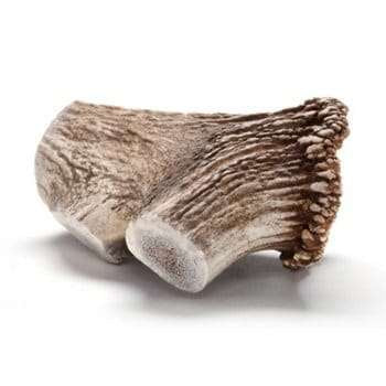 Elk Antler Long Lasting chew for dogs