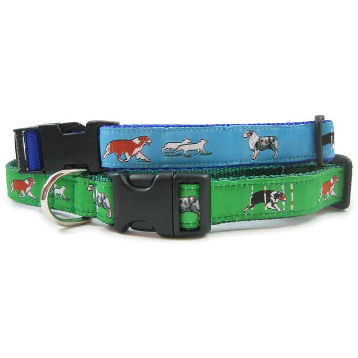 Australian Shepherd Dog Collar or Leash