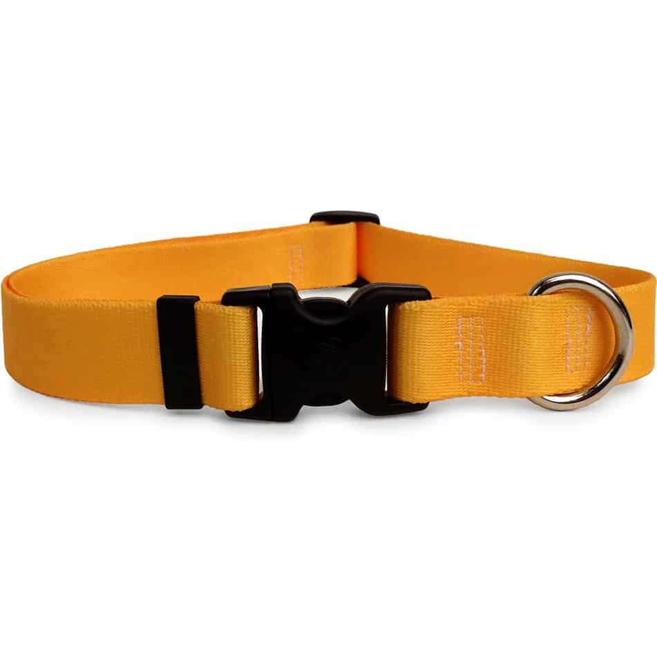 Solid Gold Colored Dog Collar- adjustable or martingale