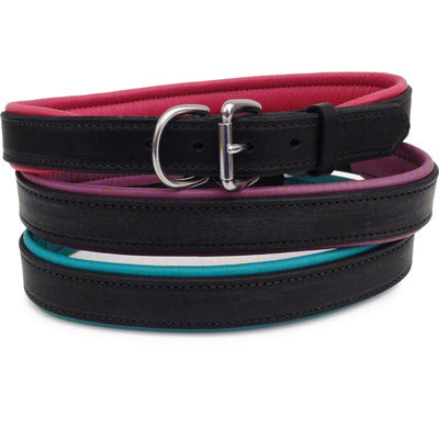 Engraved Padded Leather Dog Collar- black with colorful padding
