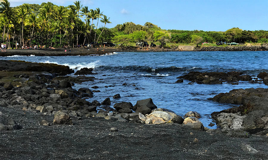resting turtles at Punaluu Black Sand Beach