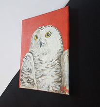Load image into Gallery viewer, Snow owl