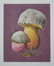 Load image into Gallery viewer, Print - Satansboleet (Satan's bolete)