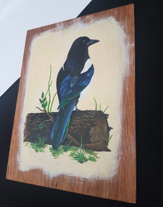 Woodland life: Magpie